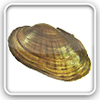 Freshwater mussels - species distributions
